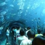 В Анталии открывается один из самых больших в мире аквариумов