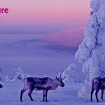 Hullu Poro приглашает Вас на Новый год и каникулы!