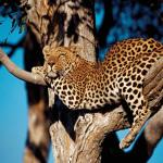 Танзания — край африканской экзотики